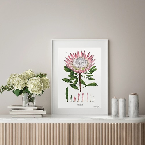 King Protea White Art Print