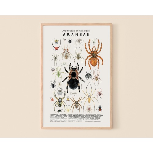 Creatures Of The Order Aranae