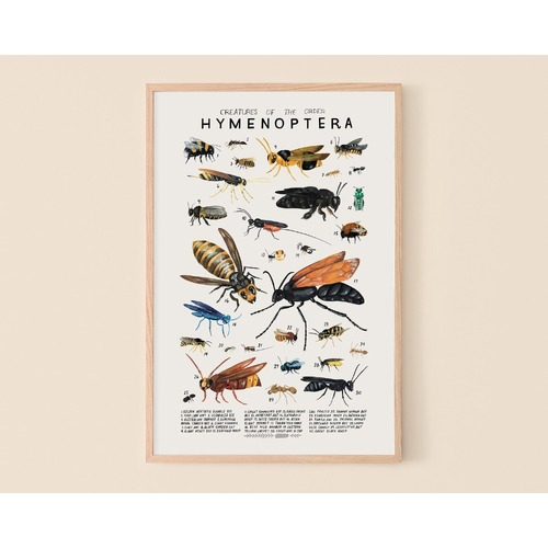 Creatures Of The Order Hymenoptera