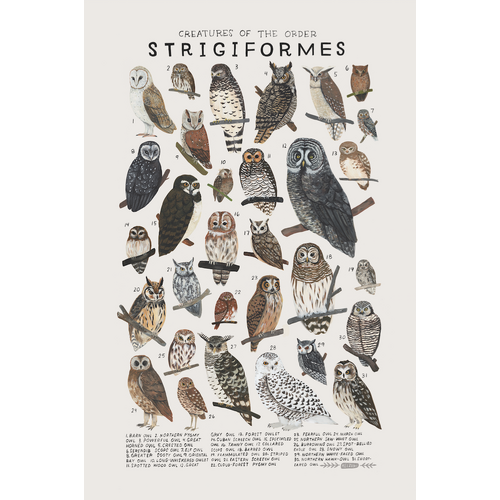 Creatures Of The Order Strigiformes